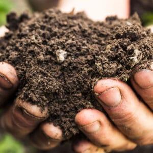 Composts et fumiers